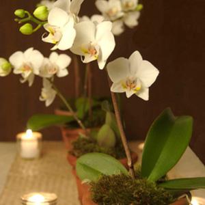 bbrooks flowers unique orchid plants flower delivery
